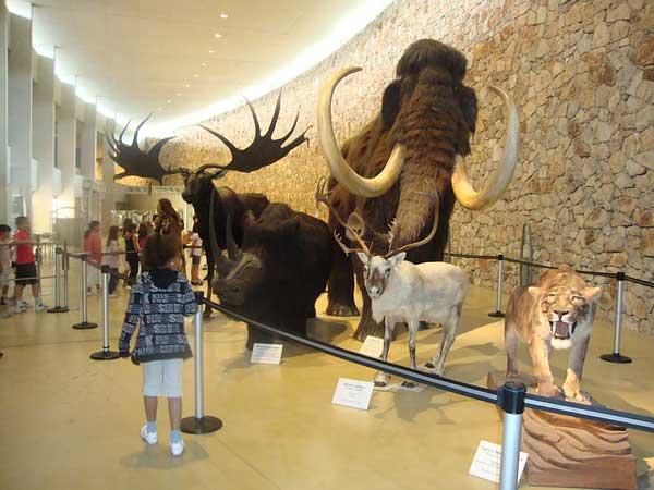 activités musee-prehistoire-quinson-verdon